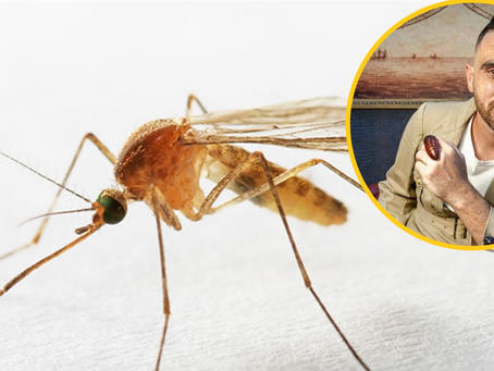 Have You Noticed Fewer Mosquitoes This Summer? Here's Why