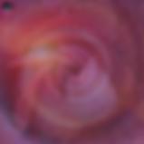 Copy of rose spiral finished.png