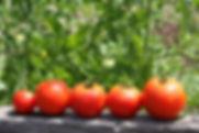 томаты открытый.jpg