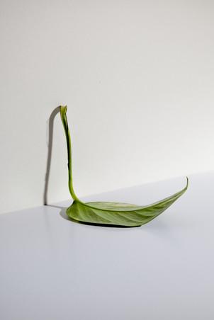 leaf (1/3)