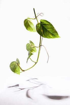 leaf (3/3)