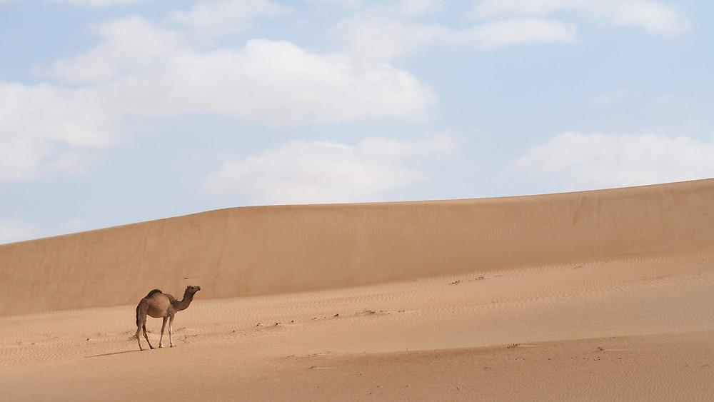 Désert à Oman, voyage en road-trip, blog de voyage.
