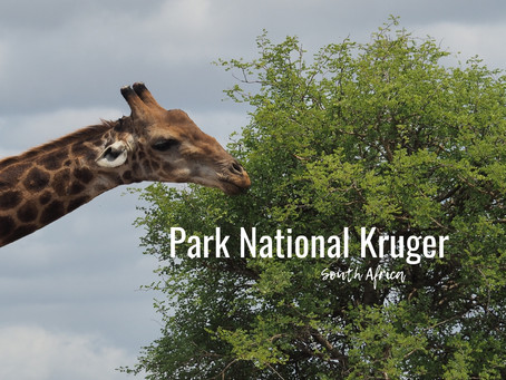 Afrique du Sud - Parc Kruger