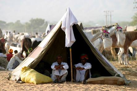 Tente de chamelier en Inde
