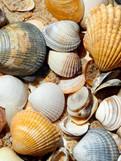 Coquillages sur la plage au Portugal