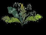 Black coral logo.png