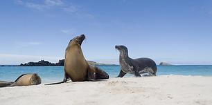 Galapagos tile image.png