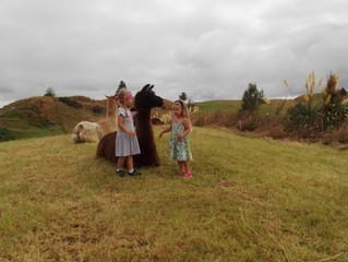 Grandchildren and Llamas