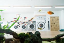 Aquarium Laundry