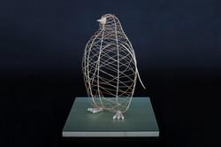 Bird Kite Series
