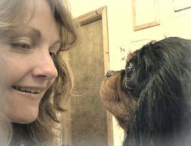 Enniscorthy wexford dog grooming boarding kennels