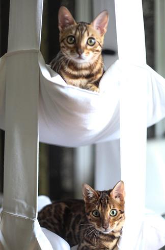 Chrystal och Hunter inviger den hängande sängen.