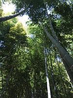 竹藪.jpg