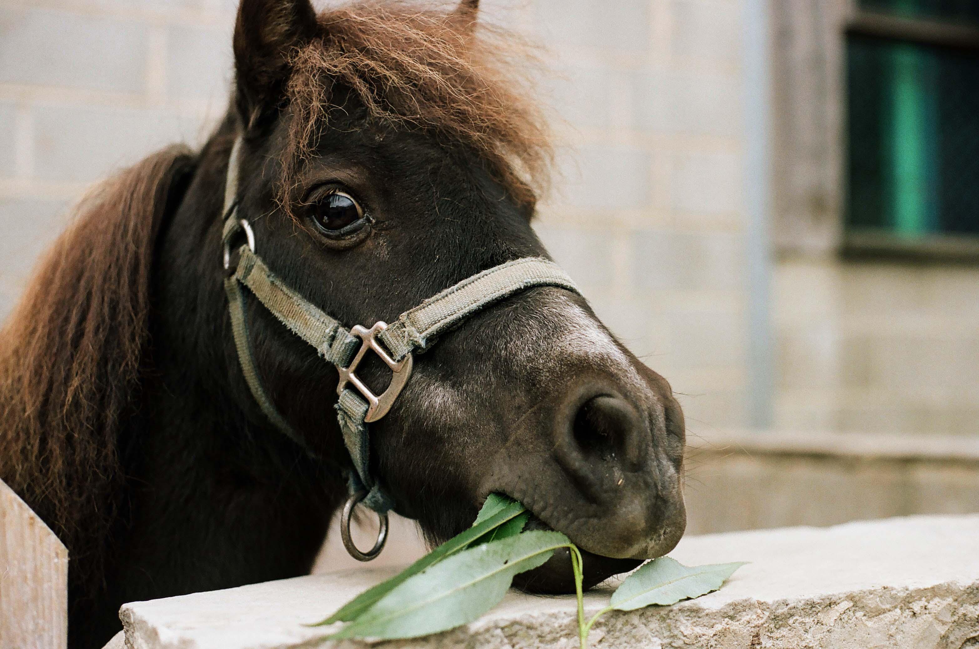 Lucky, the Pony