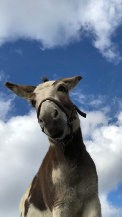 William, our Donkey
