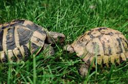 Flash & Keith - Tortoises