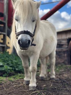 Raffles, the Pony