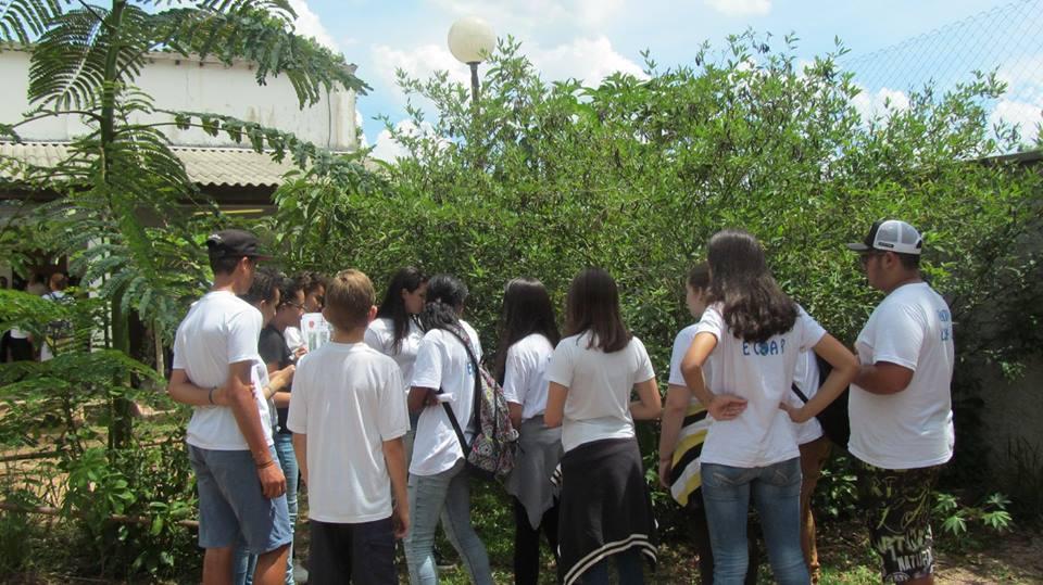 Projeto Ecoar175