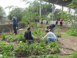 Projeto Ecoar173