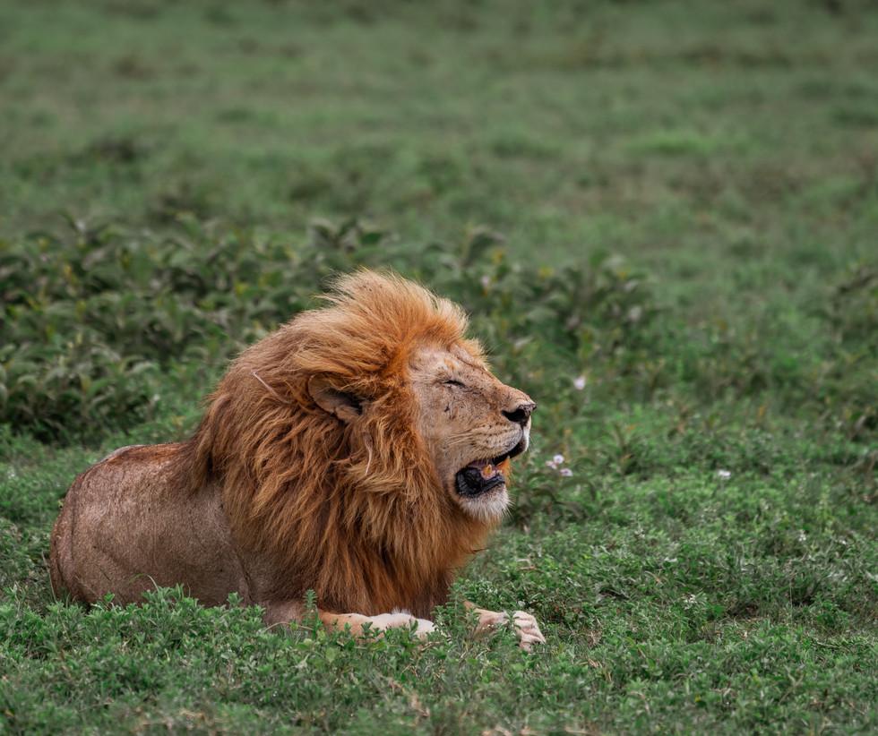 17 jul_lion3d.jpg
