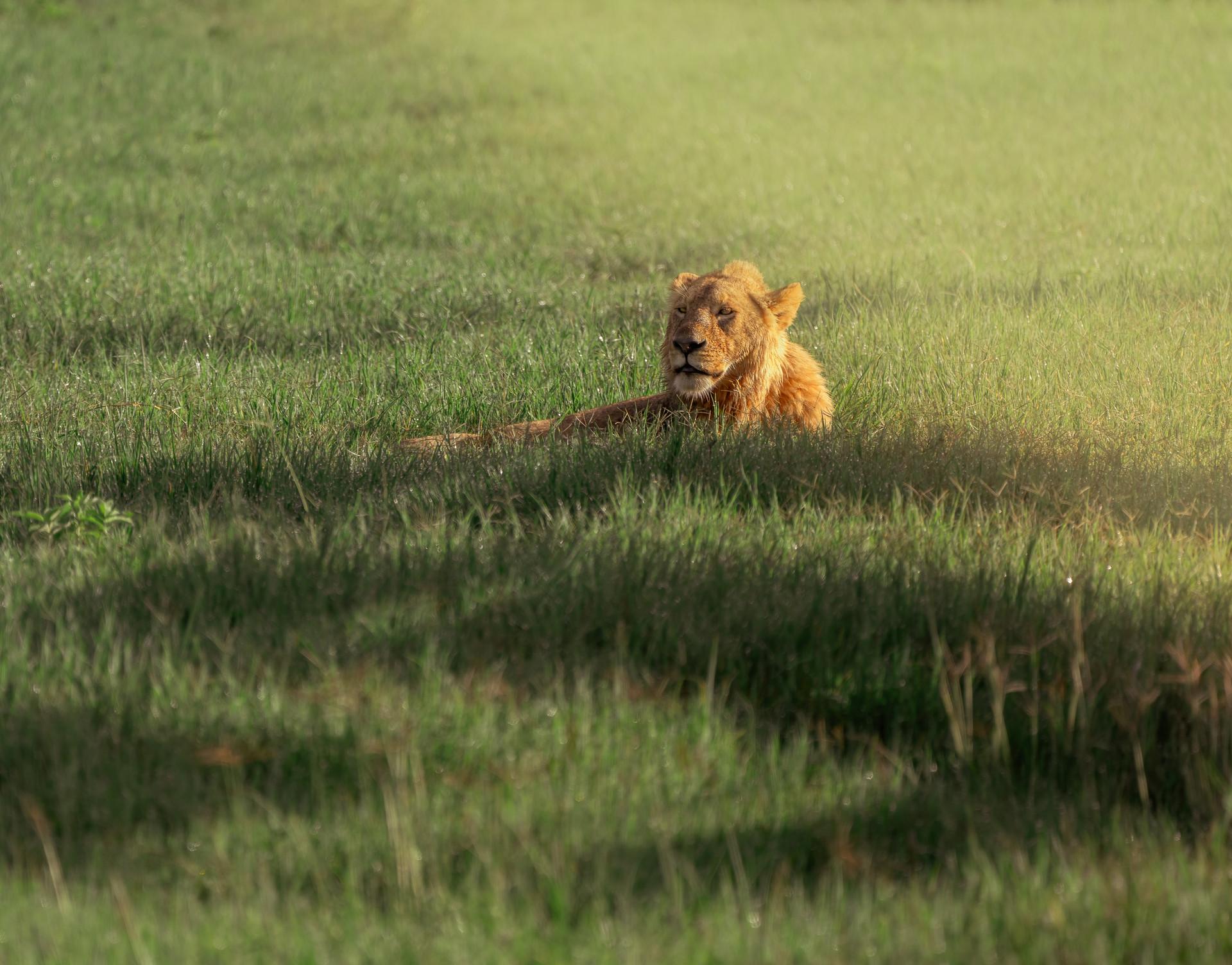 16 nov_lion.jpg