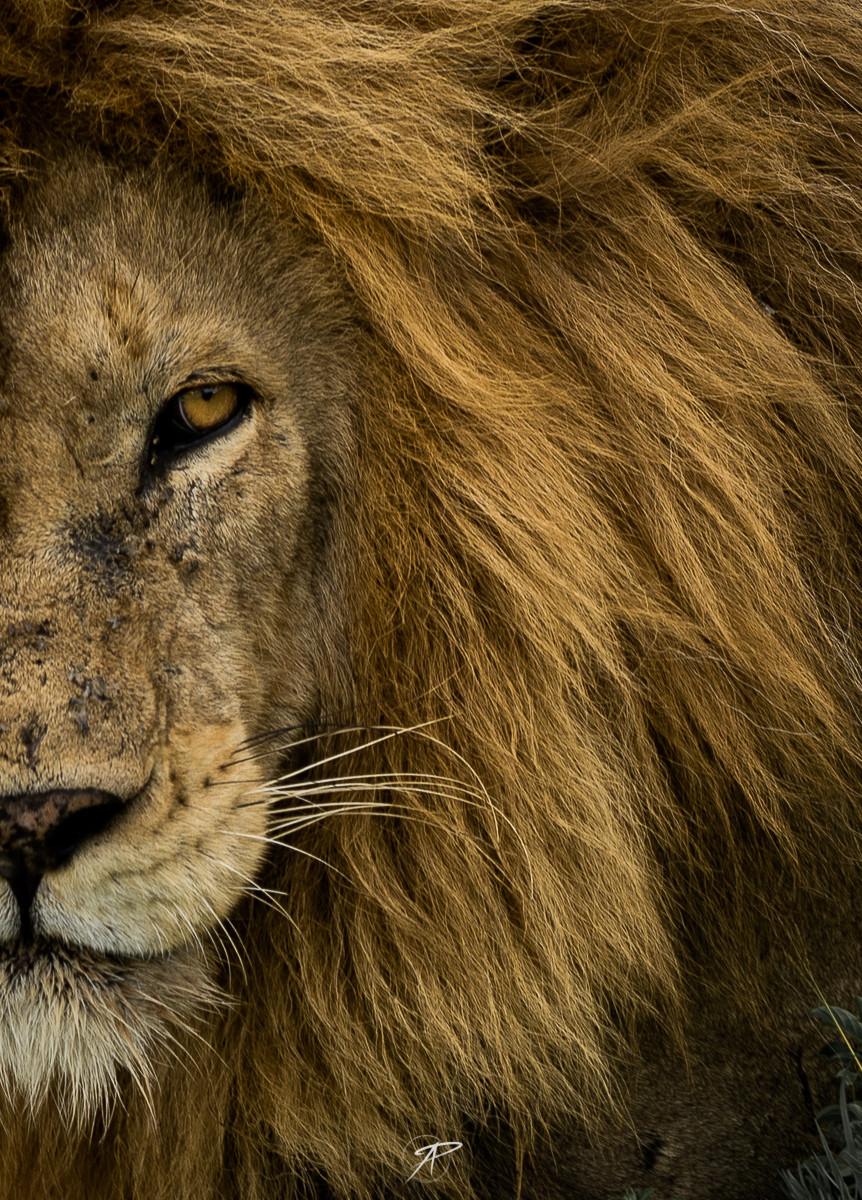 14may_lion.jpg