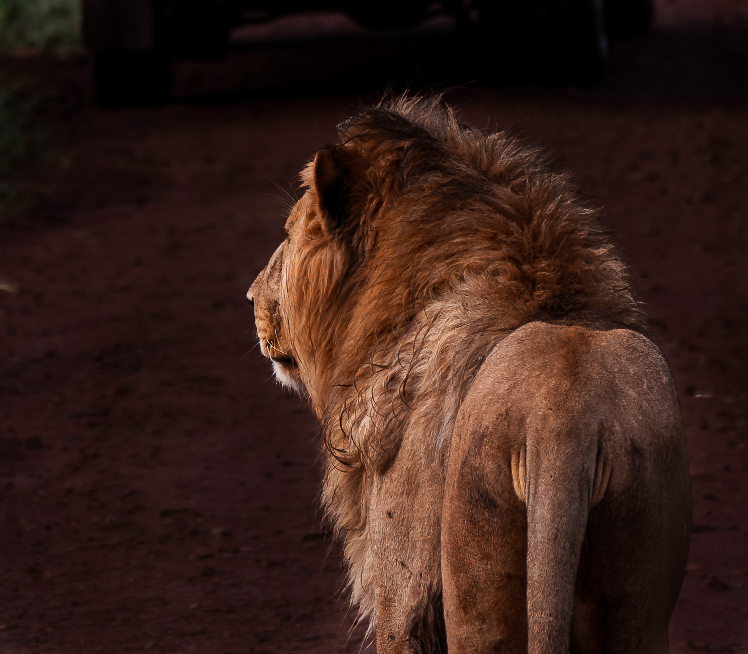 28oct_lion2.jpg