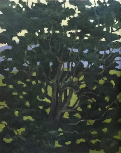 Curly Willow – Evening