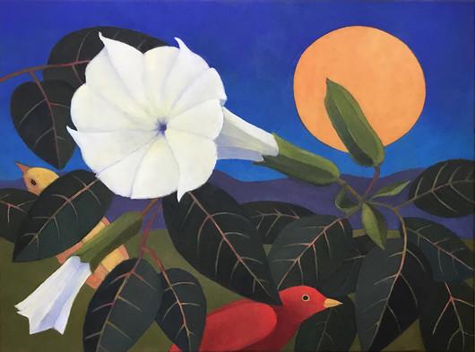 Moonflower Dream