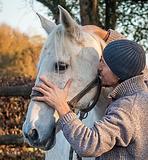 Vétérinaire acupuncteur équin