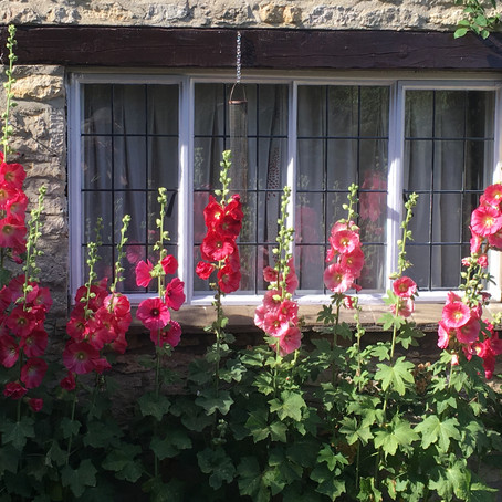 Hollyhocks and aprons