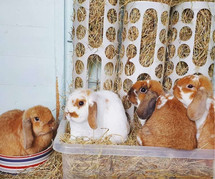 A Guide to Hay Racks for Rabbits