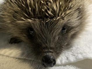 I set up a hedgehog hotel