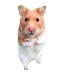 Hamster Welfare