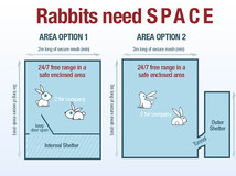 A Better Life For Rabbits
