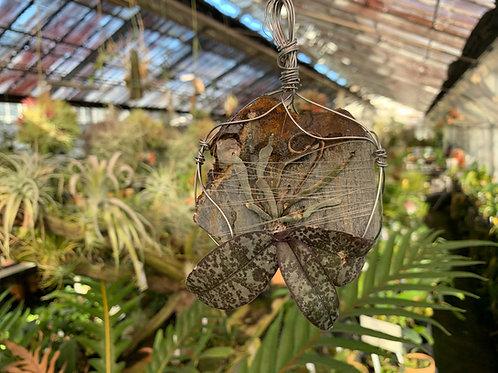 Phalaenopsis schilleriana,Orchid,Jewelry,Gem,Jewel,Cluster,Mineral,Fluorite,Amethyst,洋蘭,洋ラン,洋らん植物,宝石,原石,天然石,ミネラル,クラスター,フローライト