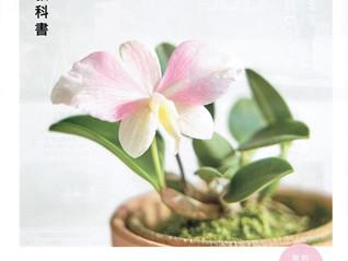 Botapii ボタピー 2月号に中藤洋蘭園ランが紹介されました!