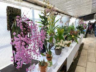 Orchid Festival in GUNMA (オーキド フェスティバル イン 群馬)のご報告