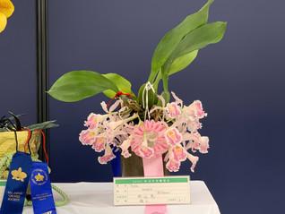 豪華な花にサンシャインシティ世界のらん展2021の写真を追加しました。