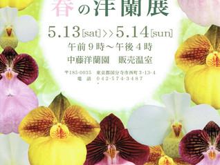 春のイベントのお知らせ