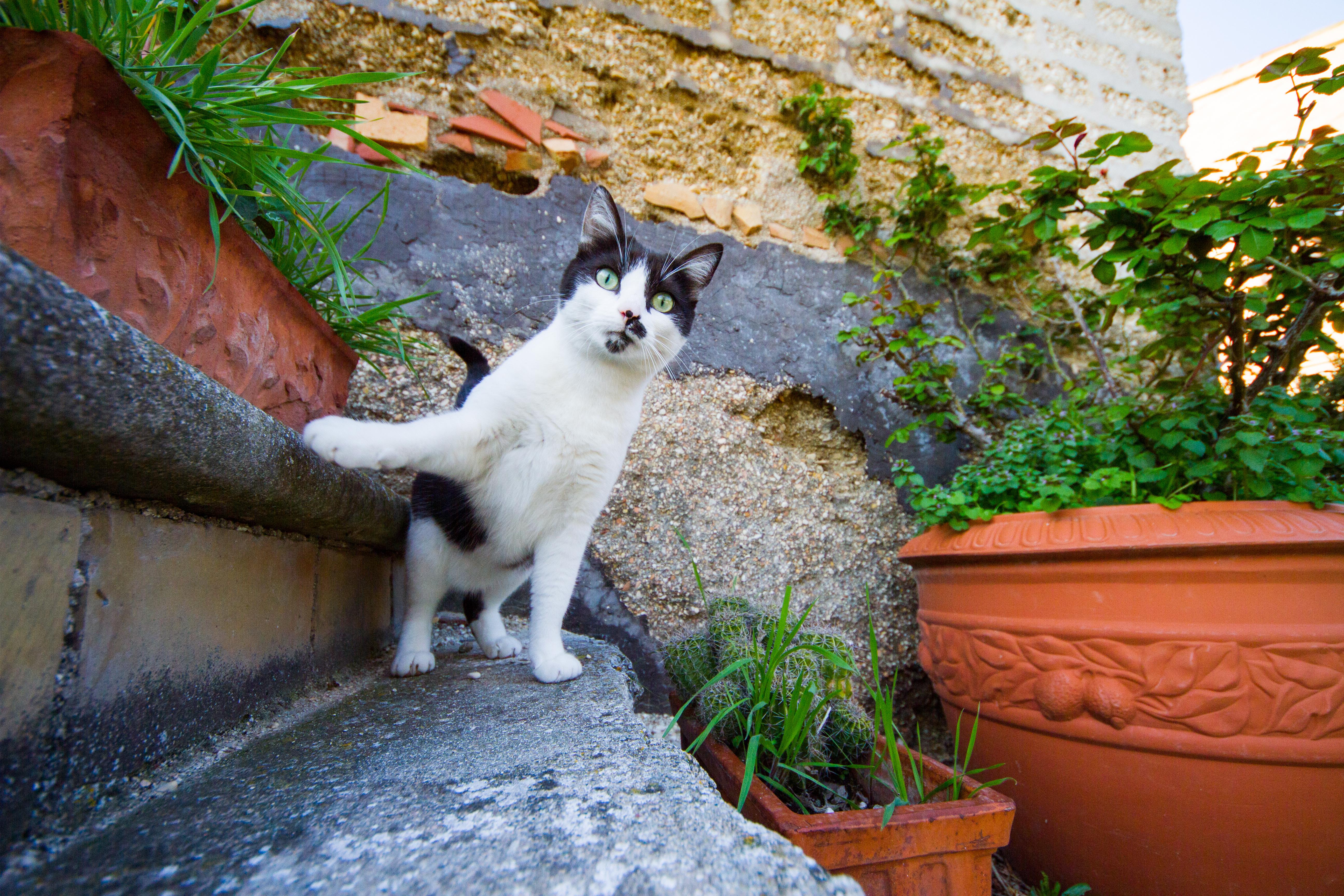 Sergi/Gattaccia/Le chat