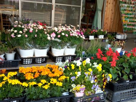 季節の花々、売っています。