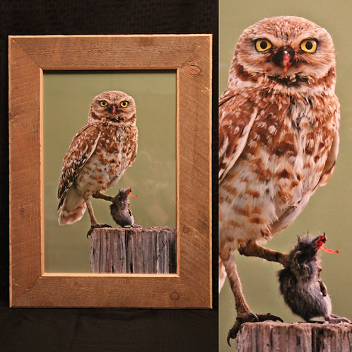 Wood Picture Frames | Wildlife Photography | Montana's Lost Art | Home Decor