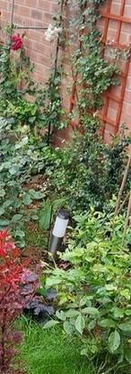 Summer garden perennials