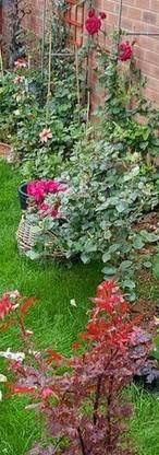 Summer perennials and shrubs