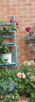 Gravel garden with plant theatre