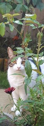 A pet-friendly garden