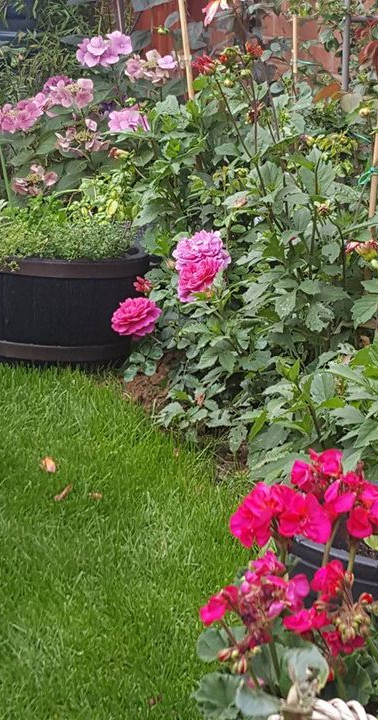 Colourful garden with water barrel