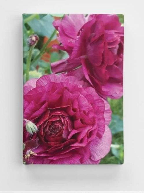 Ranunculus Solo Canvas Print 20 x 30cm