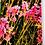 Thumbnail: Lavender and Artemisia